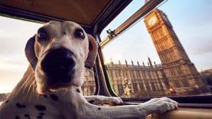 Dog on bus