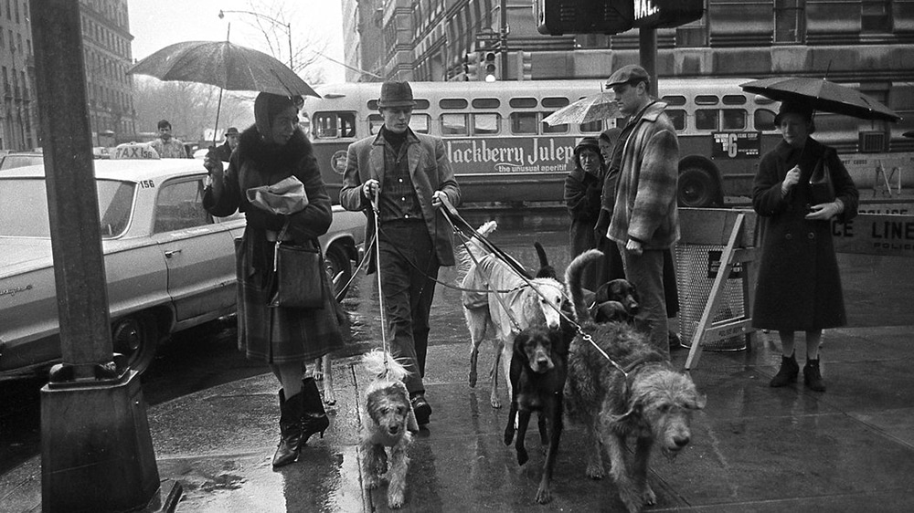 Jim Buck, NYC's first professional dog walker