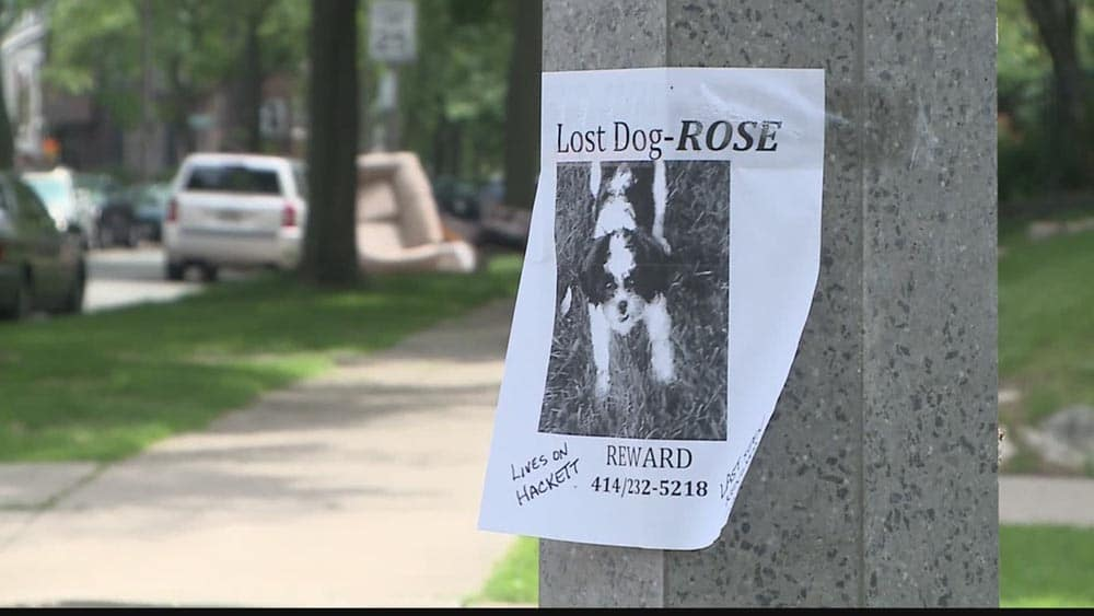 Lost dog notice on light pole